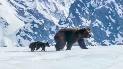 Be Sure to Catch Disneynature's BEARS Out on Earth Day 2014 ~ #DisneynatureBears #DisneySMMoms