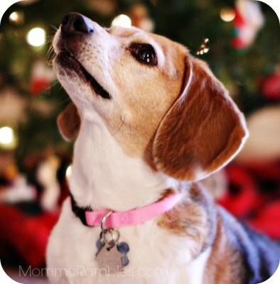 Need Christmas Present Ideas for Your Pet? Check Out Walgreens Pet Shoppe ~ #HappyAllTheWay #shop #cbias