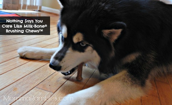 Nothing Says You Care Like @MilkBone Brushing Chews ™ ~ VISA Gift Card #Giveaway