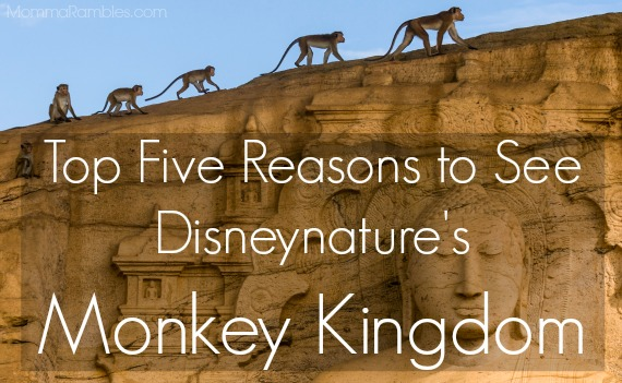 Disneynature's Monkey Kingdom Ph:  ©Disneynature 2015