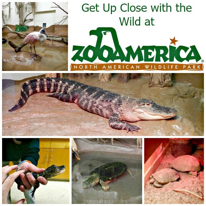 ZooAMericaCollage
