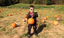 2020 Maryland Pumpkin Patches & Fall Fun